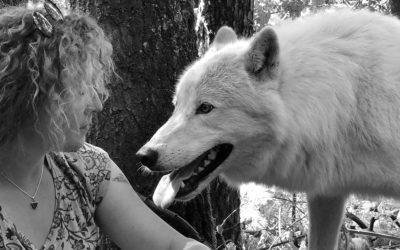 Bienvenue chez Wolf Project!