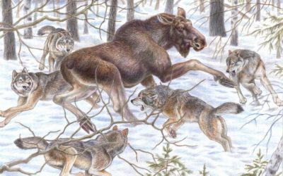 La chasse : une stratégie et des mâchoires rapides