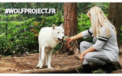 Wolf Spirit : une excellente journée avec les loups !