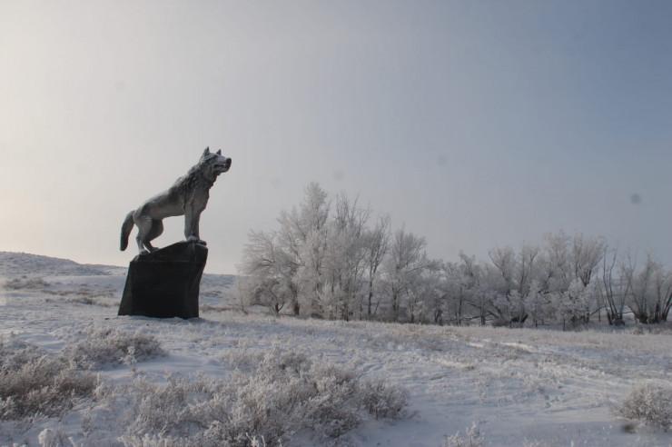 Un énorme loup s'est installé au Kazakhstan !