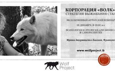 Wolf Corporation :  webinar for business !